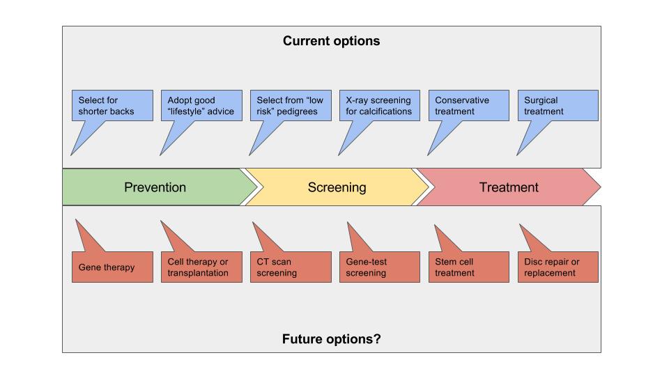 Dachshund Ivdd Potential Future Treatments