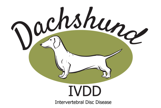 dachshund ivdd all about back disease and our uk screening